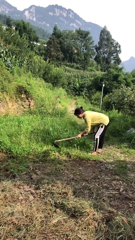 这里用除草剂的也不多,平时会把牛牵在这里吃草,大家不要纠结这个问题啦,铲完把草根弄出来倒掉撒点种子